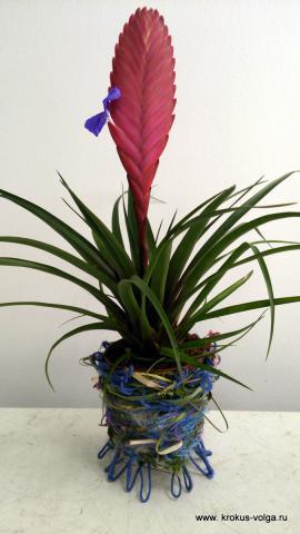 Оформление горшка растения.
