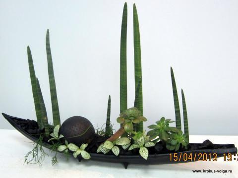 Композиция с горшечными растениями.